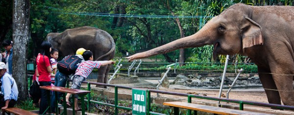 Saigon Zoo, elephants