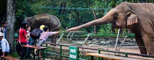 Saigon Zoo, elephants